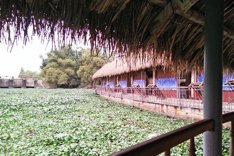 Wasserhyazinthe_an_einem_Restaurant_Boot_in_Vietnam