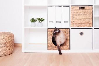 Katzenkorb für Kallax und Billy Regal von Ikea