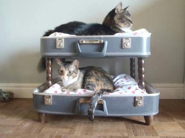 Katzen_Korb-aus_Koffer