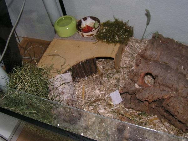 Hamsterk-fig_aus_Ikea_Knuff