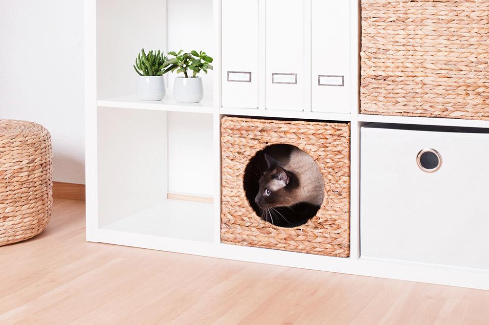 gem tliches katzenk rbchen natur f r dein ikea expedit regal new swedish design. Black Bedroom Furniture Sets. Home Design Ideas