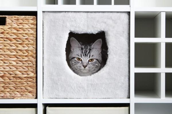 Katze Ici im Ikea Kallax Regalfach