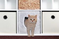 Ikea Expedit Katzenhöhle mit Benji